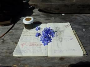 herbal studies
