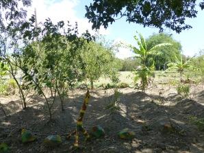 rasta farm stand garden