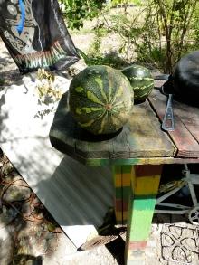 looks like a melon but its a pumpkin.